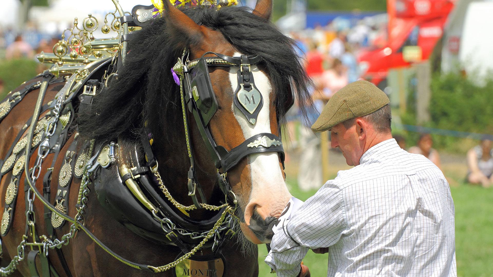 Heavy Horse Magazine - Horse At Show